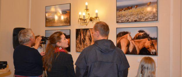 Выставка «Лошадь Пржевальского: последняя дикая лошадь на Земле» открылась в РЦНК в Праге