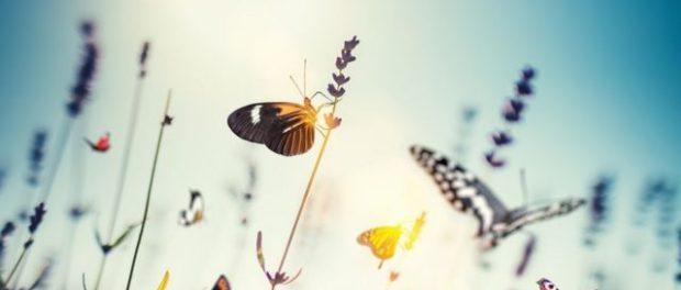 Онлайн-встреча  «Волшебные превращения насекомых» прошла на платформе Культура.рф